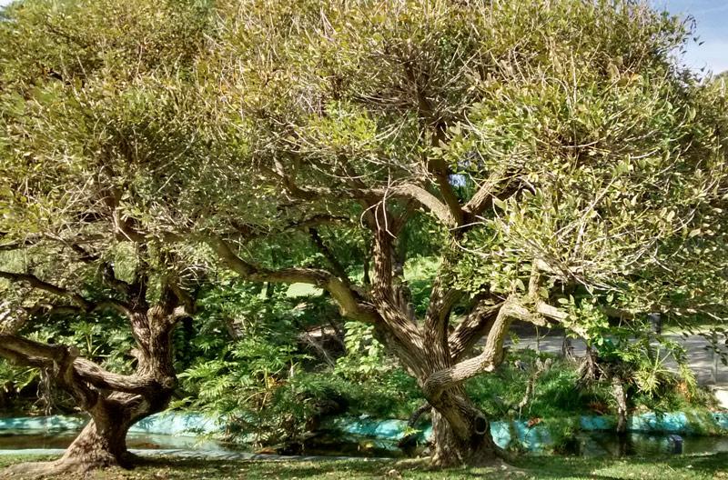 motril_arbres