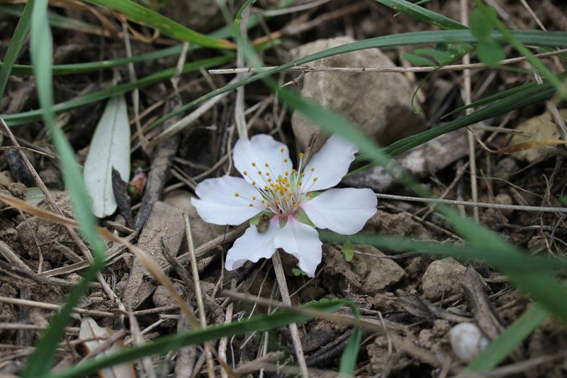 fleur_hiver2016_11