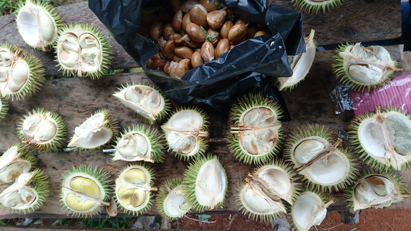 2016_durian