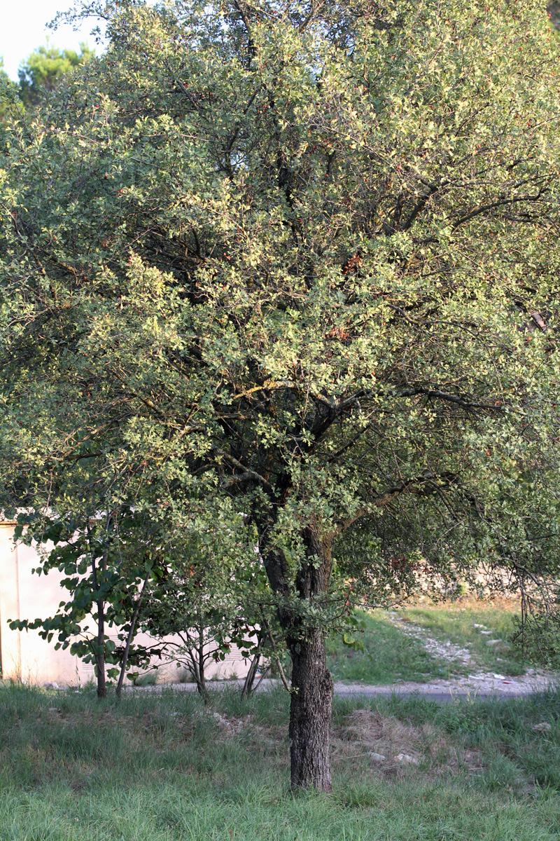 inconnu_arbre_1