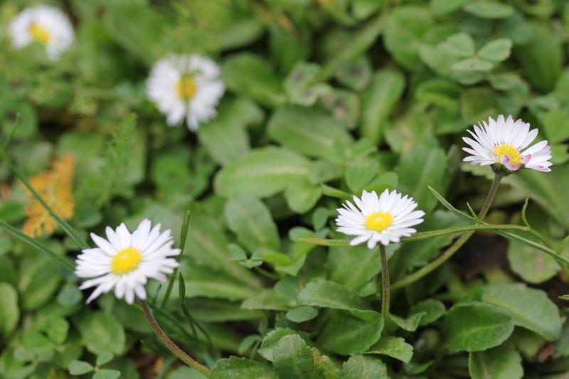 fleur_hiver2016_6