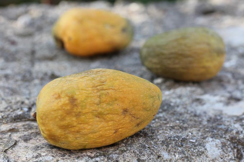 2016_mango1