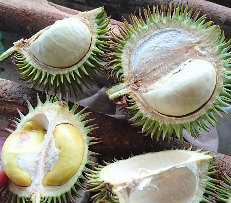 2016_durian2